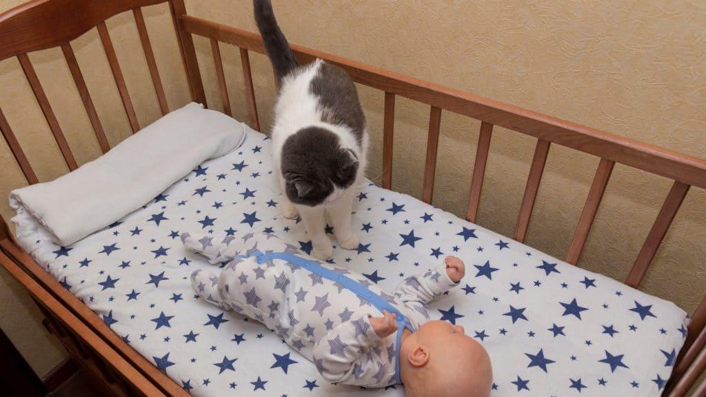 cat-in-crib-1